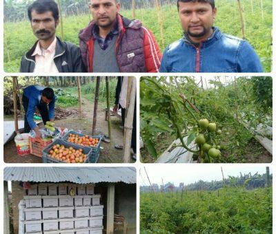 विदेशको कमाई छाडेर संयुक्त कृषि पेशामा जम्दैछन चितवनका ३ युवा (फोटो फिचर सहित)