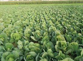Farmer start  organic farming system in far-west