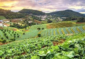 प्राङ्गारिक खेतीतर्फ उन्मुख हुँदै स्थानीय तह किसानहरु