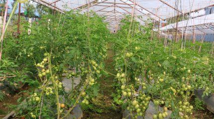 तरकारी खेतीमा आत्मनिर्भर बन्दै दार्चुलाका किसान