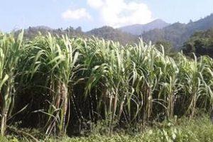'उखु नमूना गाउँ' कार्यक्रमबाट ४ सय किसान लाभान्वित