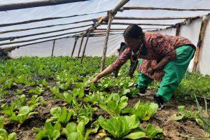 तरकारी खेतीबाट आयआर्जन गर्दै सप्तरीका कृषक