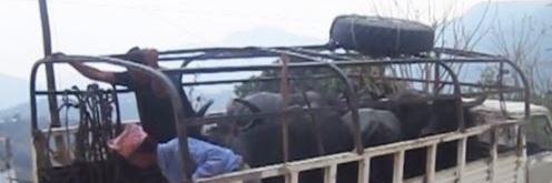 चितवनमा मापदण्ड विपरीत पशु ढुवानी गर्ने ३६ सवारी साधन कारवाहीमा